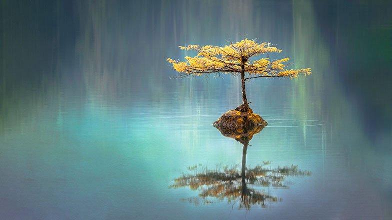 Lone tree on quiet lake.